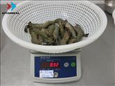 Black Tiger - HOSO - Semi IQF - Size 16/20 - 80%NW - Pack 1KG - Checking Weigh after Defrosted