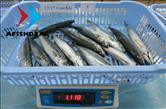 Round Scad - Gutted - 80%NW - Size 12 to 15pcs/KG - Check Weight after Defrosted