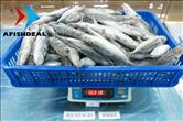 Round Scad - Whole Fish - Carton 10KG - Check Weight