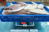 Crimson Snapper - Fillet & Portion - Skin On - Carton 10KG - Checking Weight